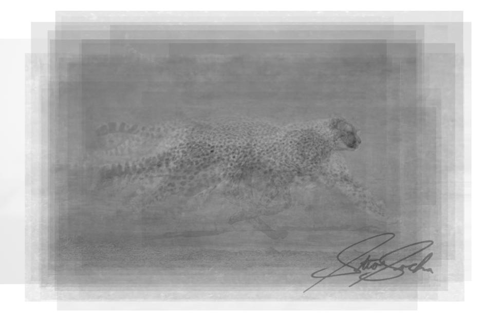 cheetah overlay