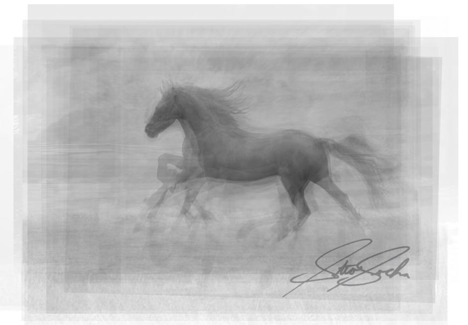 horse overlay
